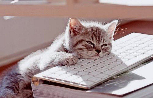 bored-cat_work-600x384