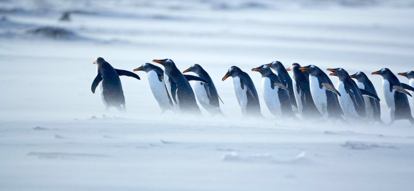 penguins-leader-1940x900_34162